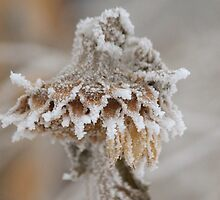 Frosted by Kathi Arnell
