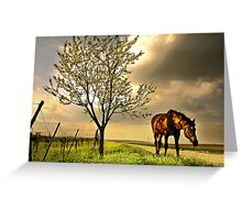 dappled blossoming light  Greeting Card