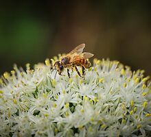 Covered in Pollen by Nicole Petegorsky