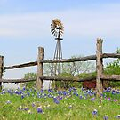 The Bluebonnet Patch by Roma Holley