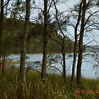 Tarbuck Bay NSW by Judy Woodman
