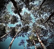 From Below by Tommy Seibold