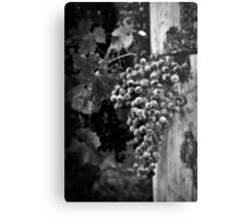 The fruit of the vine Metal Print