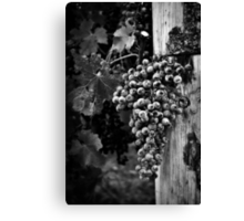 The fruit of the vine Canvas Print