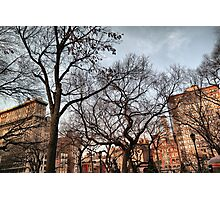 Behind The Trees From Union Square Photographic Print
