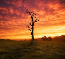 Show Off by Rodney Trenchard