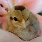 Teeny in the palm of my hand by angelandspot