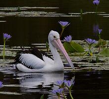 Among The Lilies by byronbackyard