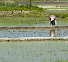 Rice Planting by ablyth