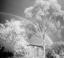 The Midnight Tree by Juilee  Pryor