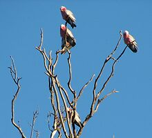 Birds of a feather flock together by smor245
