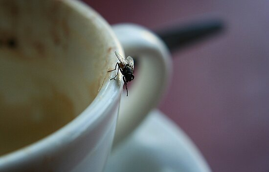 Fly & cappachino by ingridewhere