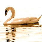 Swan on Golden Pond by Laura Jean Taft