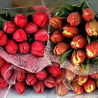 Tulips For Sale by Merilyn