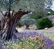 under the old olive tree by Jo-PinX