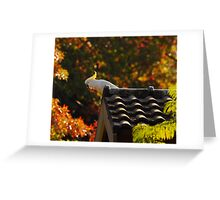 Autumn Cocky Greeting Card
