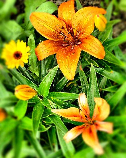 Tiger lily by Kurt  Tutschek