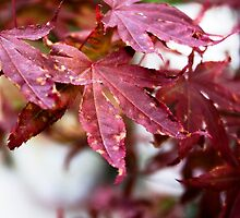 Red Leaves by Lix Hewett