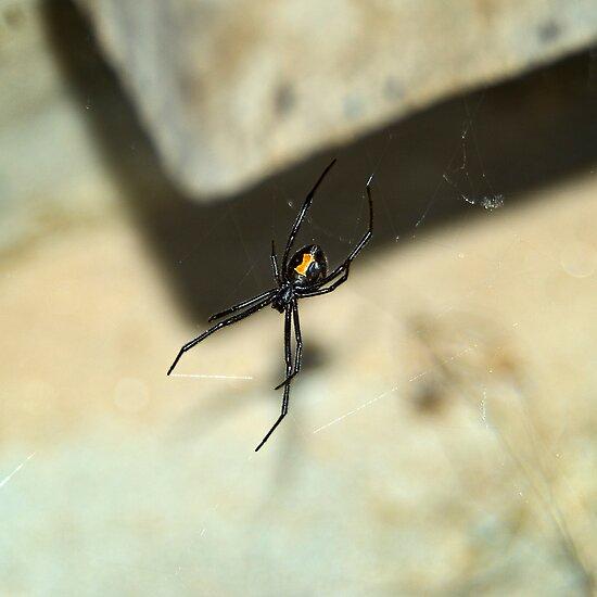 Western Black Widow Spider by Bryan Peterson