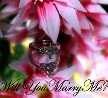 Will you Marry Me? by Stacey Dionne