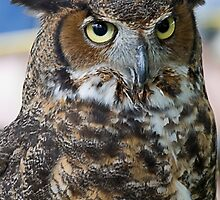 Great Horned Owl by Patricia Bolgosano