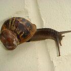 Snail's Pace by ScarlettRose