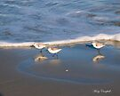 Sandpipers Chasing the Waves ©  by Mary Campbell