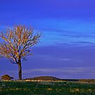 All Alone On The Hill by Terry Everson