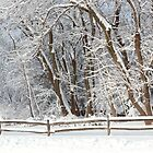 Winter - Westfield, NJ - Snow Day by Mike  Savad