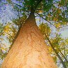 Tree Tops by Wanda Raines