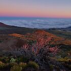 Mauna Kea Majesty by Randy Richards