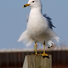I'm more than a gull- I'm a SEAGULL by Larry Llewellyn