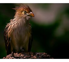 Precious Birdie Photographic Print
