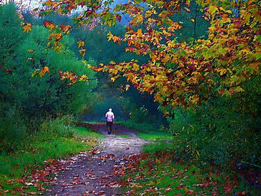Autumn Path by Julie Marks