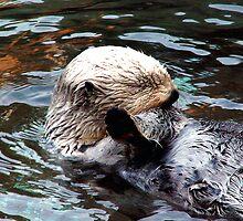 Sleeping Sea Otter by Koala