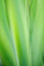 Iris impression by Patrick Morand