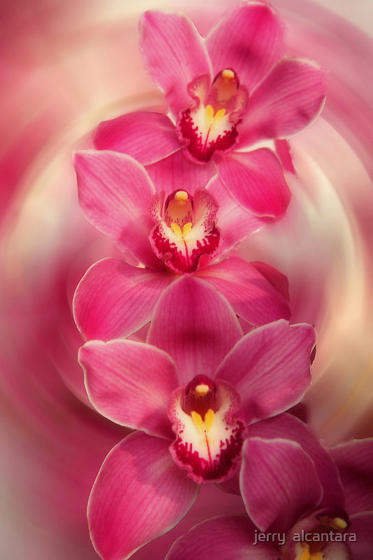 Pretty in Pink by jerry  alcantara