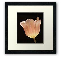 Peach Tulip Framed Print