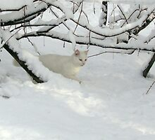 Albie the Snow Cat by Dennis Melling