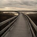 Trail in Prince Edward island by alopezc72