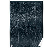 Woodland ferns acrylic plate etching, white ink on black paper Poster