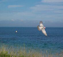 Bird on the wing by creid