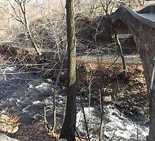 Forest, Bridge, Winter View, New York Botanical Garden, Bronx, New York by lenspiro