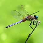 Dragonfly Landing by NaturalPhotos