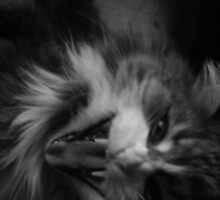 Mad Max by saundi