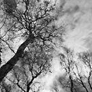 Itchy skies by Tom Black