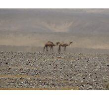 Camels in Jordan 2 Photographic Print