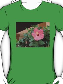 A Hibiscus Tree In The Middle Of the Sidewalk T-Shirt