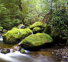 Whitehouse Creek by Mark Jones