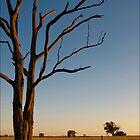 The Tumbarumba Road by Doug Faircloth